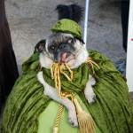Tompkins Square Dog Halloween Parade