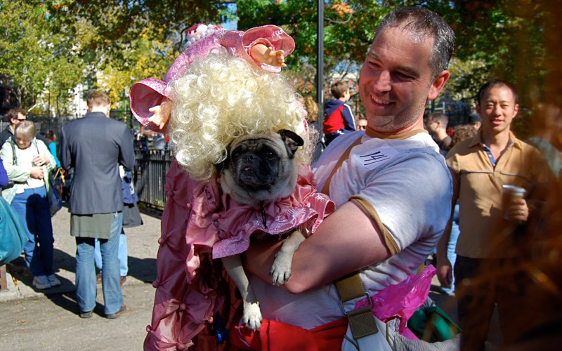 tompkins square halloween dog parade marie antoinette