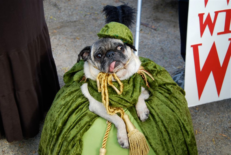 tompkins square halloween dog parade scarlett o'hara