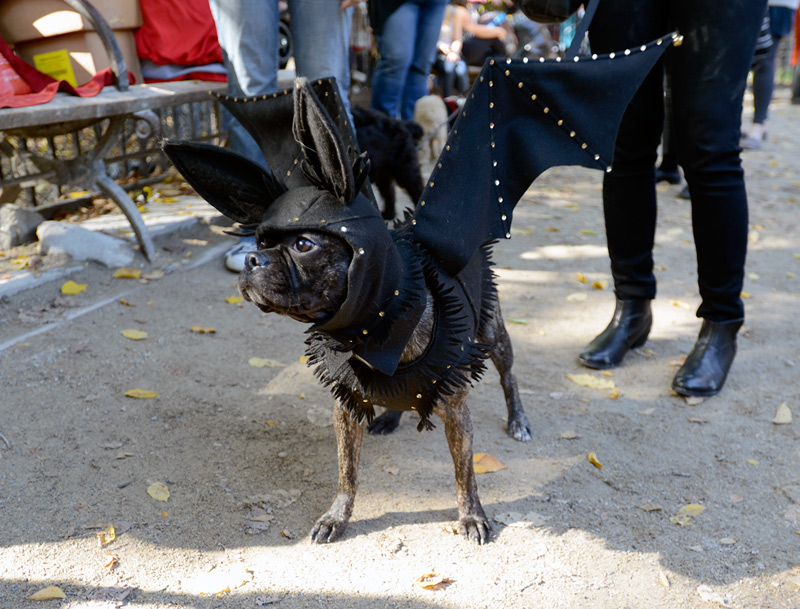 tompkins square halloween dog parade bat dog