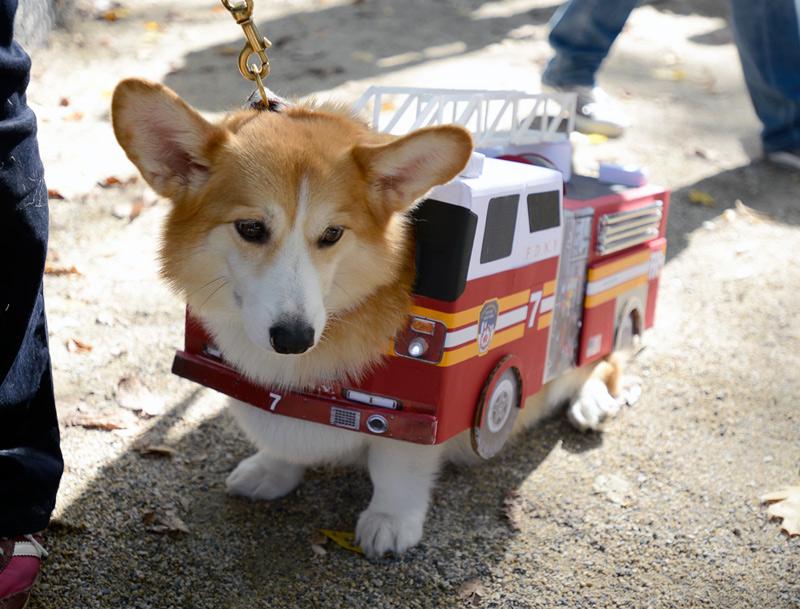 tompkins square halloween dog parade firetruck