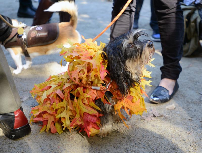 tompkins square halloween dog parade leaf pile