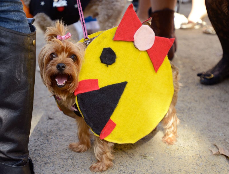 tompkins square halloween dog parade ms pacman