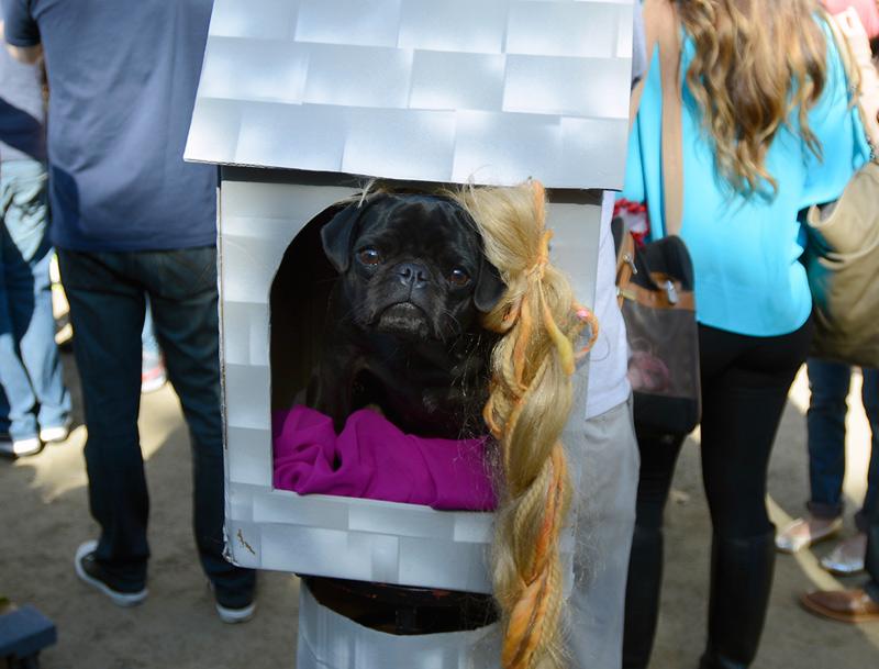 tompkins square halloween dog parade repugzel