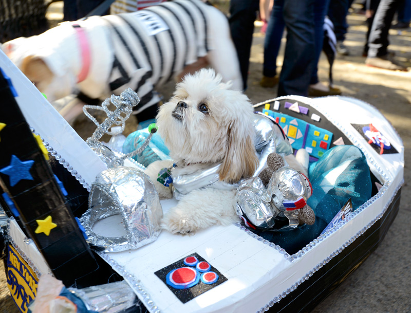 tompkins square halloween dog parade space pup